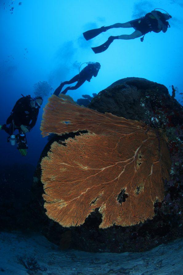 Snorkeling Tour Similan Island