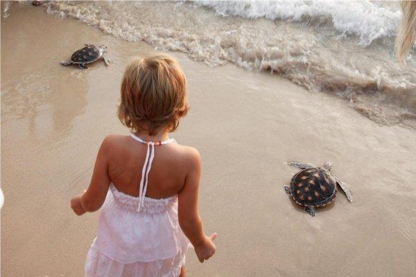 18th Laguna Phuket Sea Turtle Release Ceremony