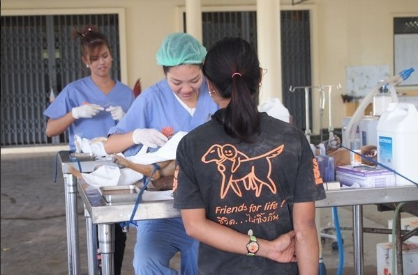 Soi Dog Foundation Mobile Clinic is moving into Srisoonthorn in July