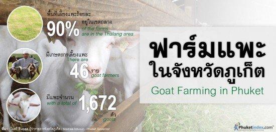 Goat Farming in Phuket