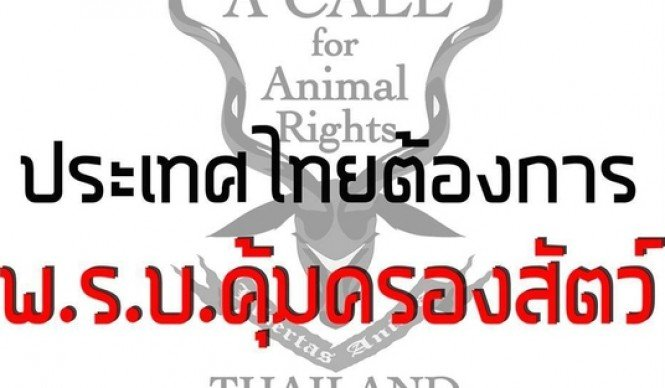 Soi Dog Foundation Criticises Ambiguity and Calls for Immediate Review