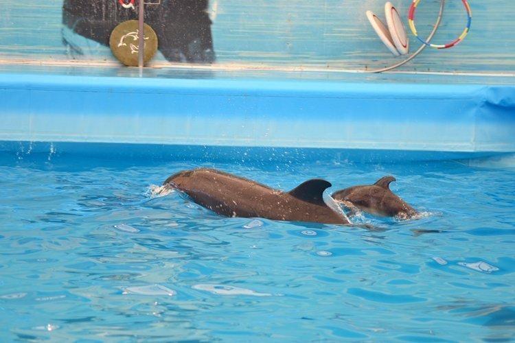 1st baby dolphin ever born in Phuket