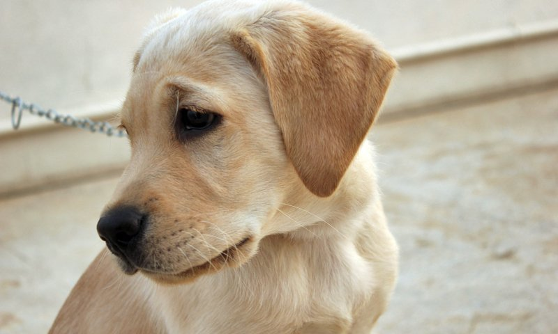 Deadly link: Puppy factories and rabies