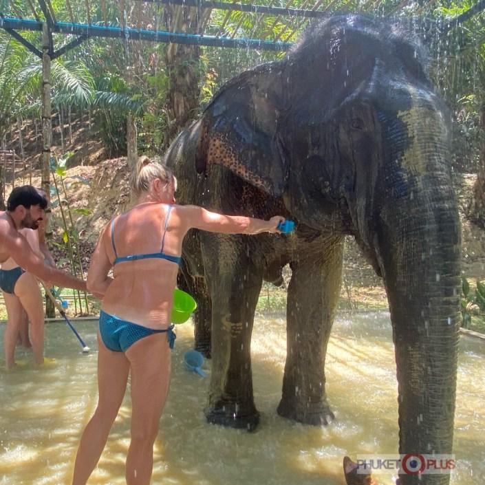 экскурсия в заповедник слонов без катания с Пхукета