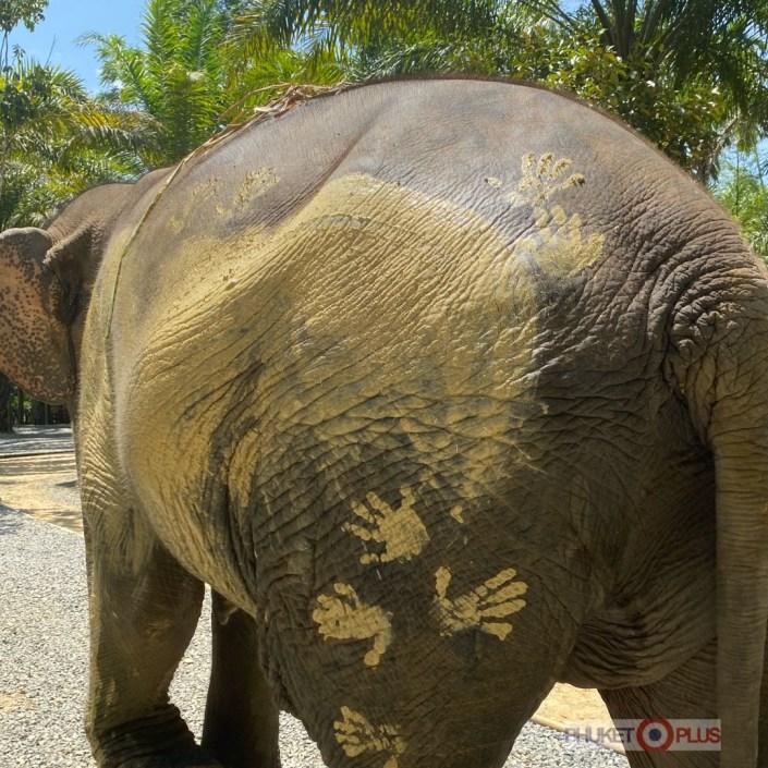 жизнь слонов в тайских заповедниках