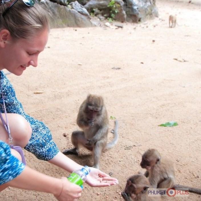 можно ли кормить обезьян на экскурсии