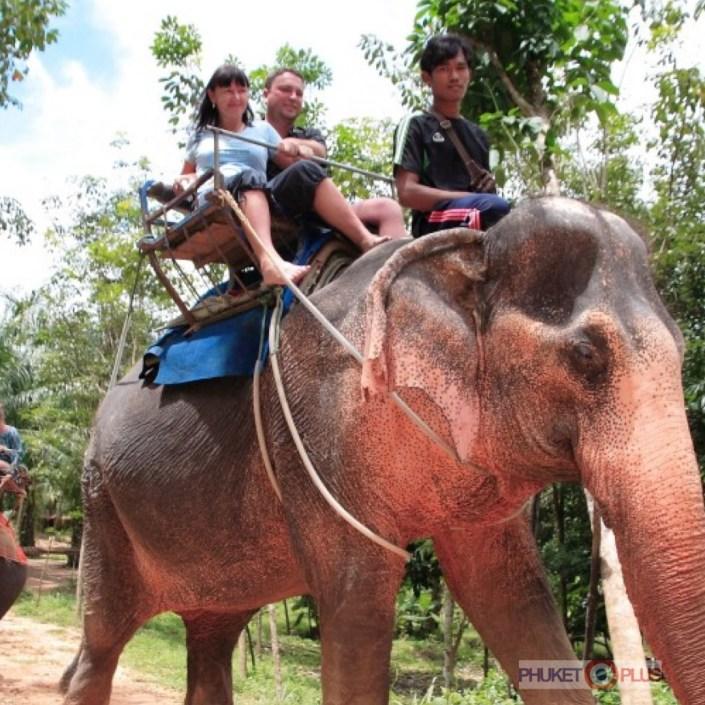где лучше покататься на слонах