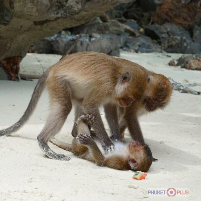 как попасть на пляж обезьян с пхукета