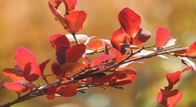 青森県の紅葉スポット
