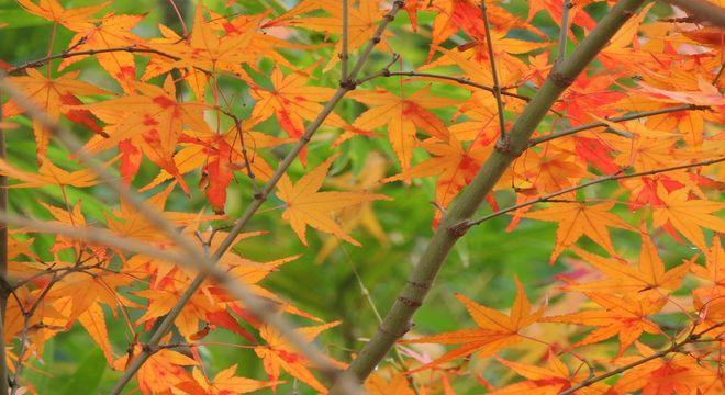 埼玉県の紅葉スポット