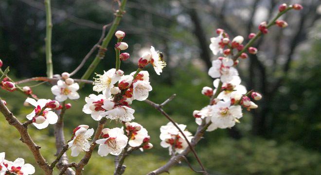 鹿児島県の梅の名所