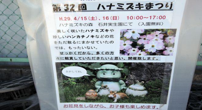 石井実生園ハナミズキまつりのお知らせ