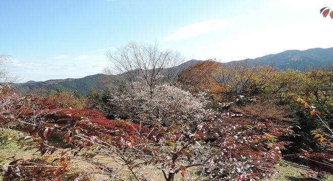 桜庭|城峯公園