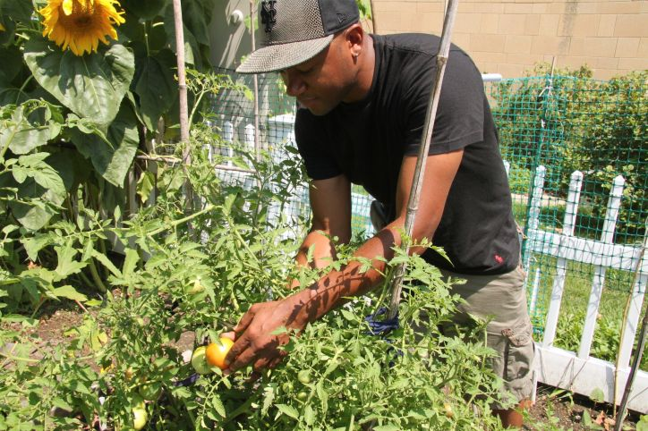 A student volunteer helps tend the garden and gets a chance to learn about how food is grown.