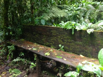 I photographed this bench in honor of everyone I wished was with me in the forest. (Smile.)