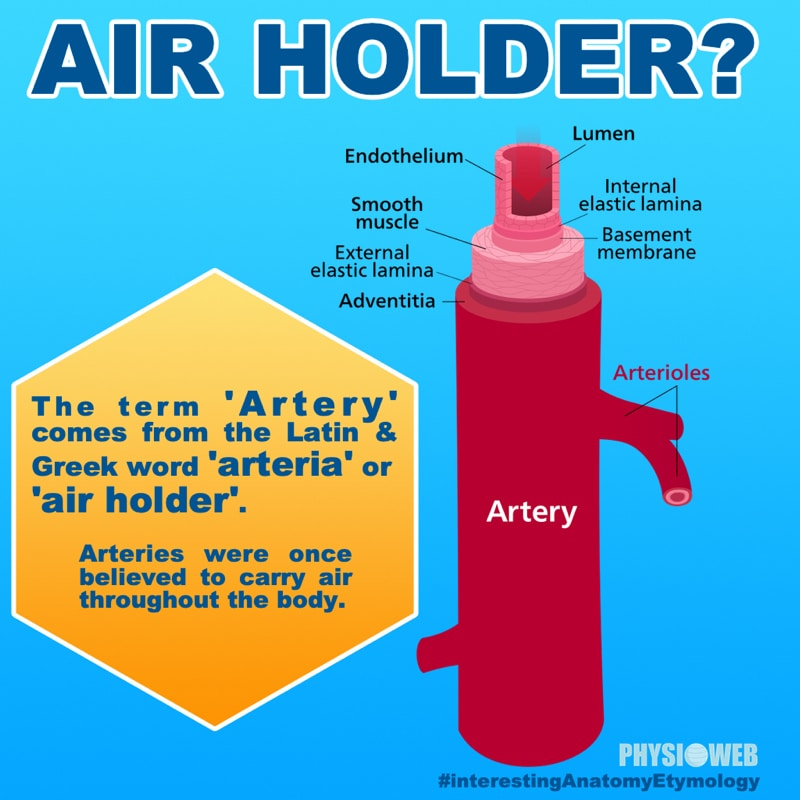 Interesting Anatomy Etymology - Artery