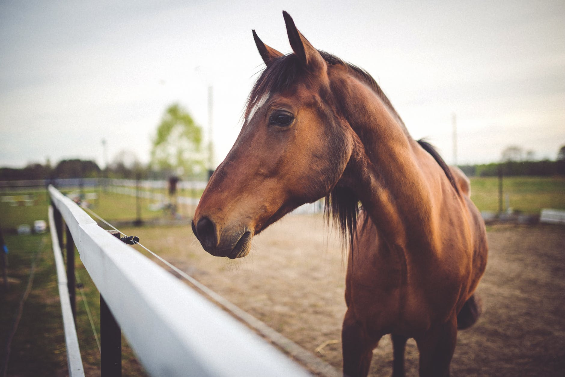 equine physical therapy