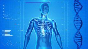 https://pixabay.com/en/human-skeleton-the-human-body-163715/