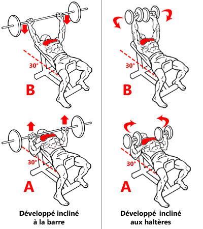 Exercices pour cibler les faisceaux claviculaires des pectoraux