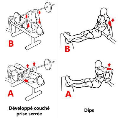 Exercices de base pour triceps