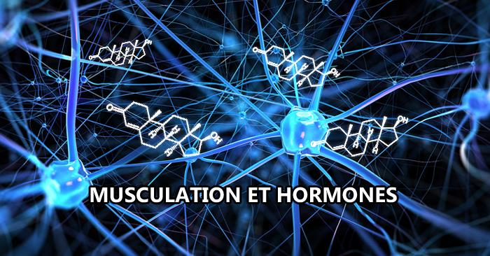 Musculation et hormones