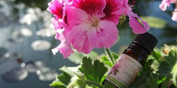 quelles sont les propriétés de l'huile essentielle de géranium rosat et comment l'utiliser facilement sans risques