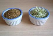 quels sont tous les bienfaits des graines germées d'alfalfa et comment les faire pousser facilement dans un germoir fait maison