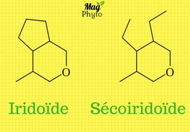 Iridoïde et Sécoiridoïde