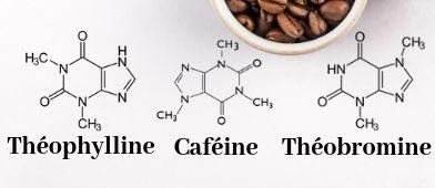 Caféine-théophylline-théobromine