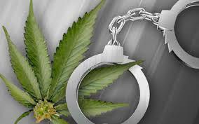 Toronto police raid and shut down dozens of marijuana dispensaries