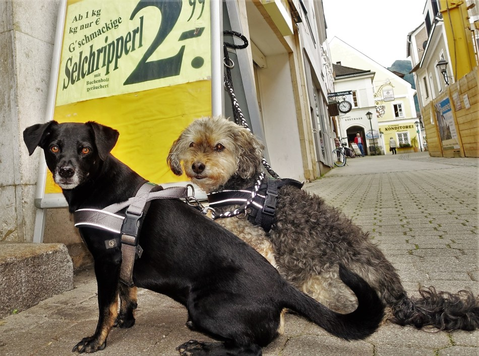 Selchripperl Hunde Foto Piaty 2.6.2016 - unbearbeitet