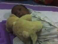 Main dgn Teddy Bear