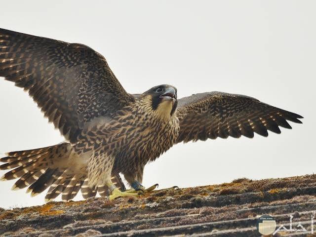 10 صور طيور جارحة وخطيرة