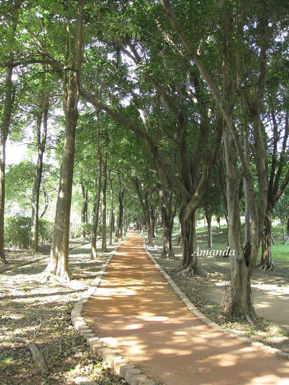 大安森林公園1.JPG
