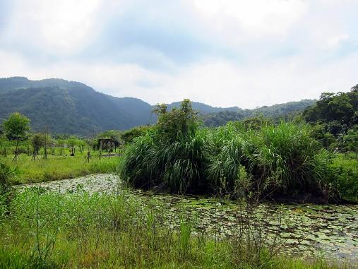 大進有機農場-生態池