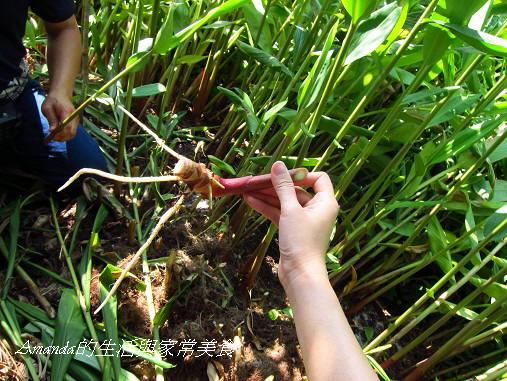 花泉農場-新芽