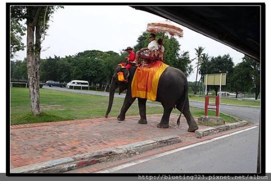 泰國大城府《Ayutthaya大城》騎大象2.jpg