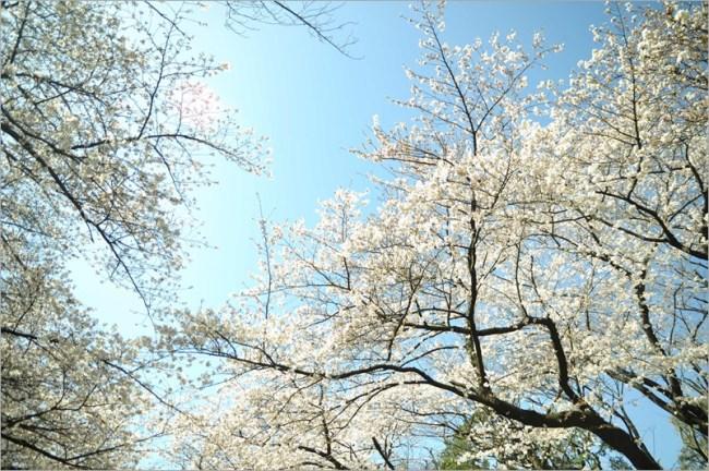 2013.03.21 淺草-上野-銀座-台場 (203)