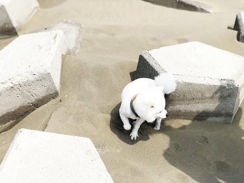 【台南七股景點】一日遊懶人包|寵物旅遊景點推薦|人氣IG打卡景點