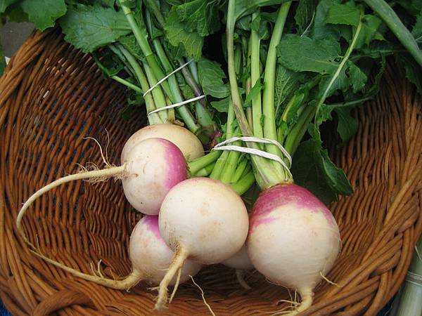 Medium-turnips