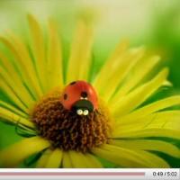 超可愛的國外昆蟲動畫短片