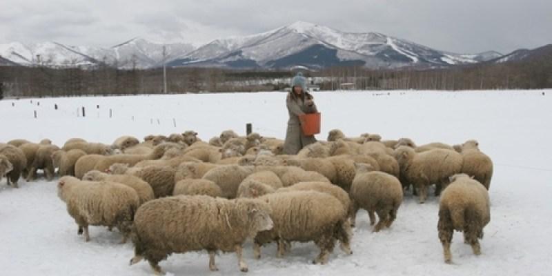 人老了就會回憶....北海道雪原裡的綿羊牧場
