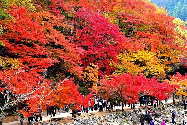 【秋季賞楓】一定要推薦的日本中部、名古屋的賞紅葉景點 @ 暢遊日本名古屋✈I Love Nagoya❤ :: 痞客邦 PIXNET ::