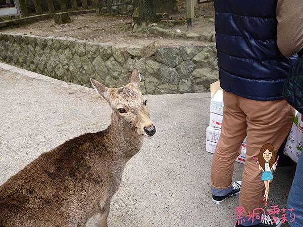 奈良公園-37.jpg