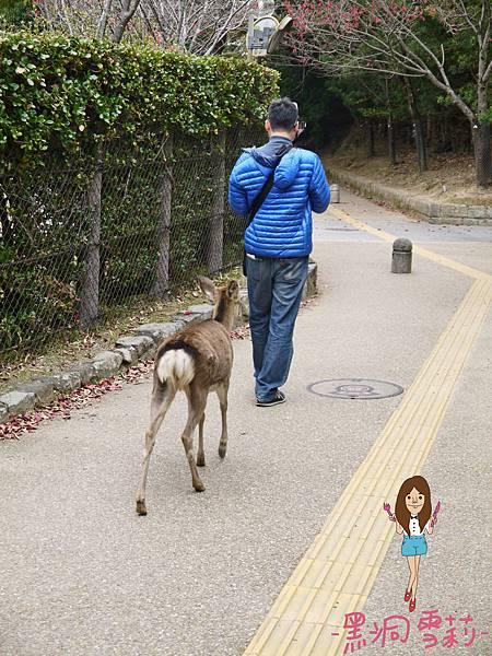 奈良公園-39.jpg