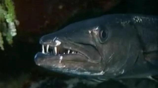 Самые опасные животные. Морские глубины смотреть онлайн ...