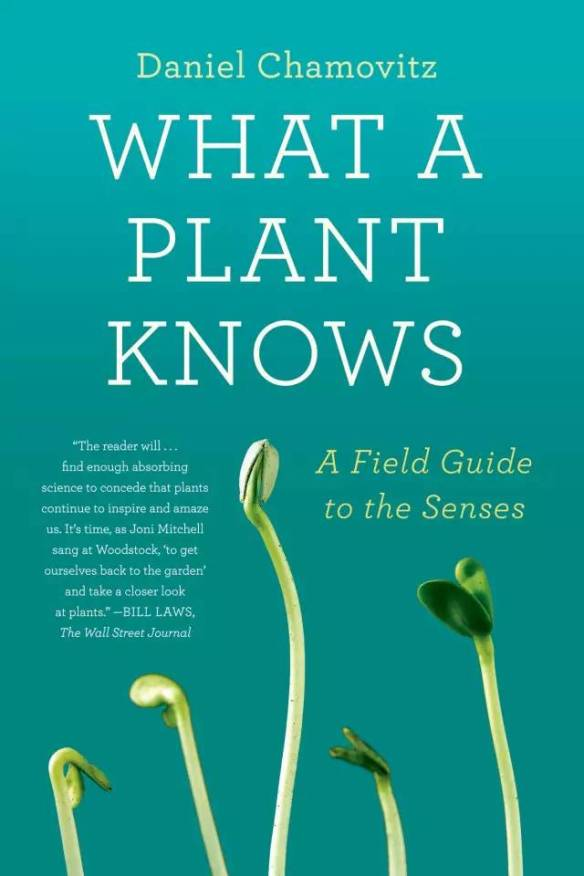 What a Plant Knows: A Field Guide to the Senses Book Cover