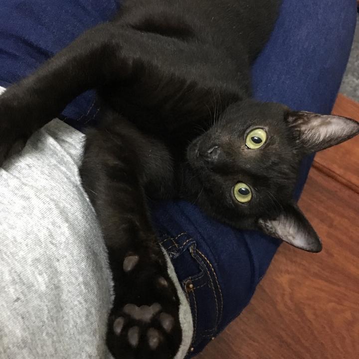 帶貓去做了絕育手術後&養貓後跟家人的矛盾?
