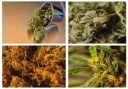 what-are-the-different-types-of-medical-cannabis