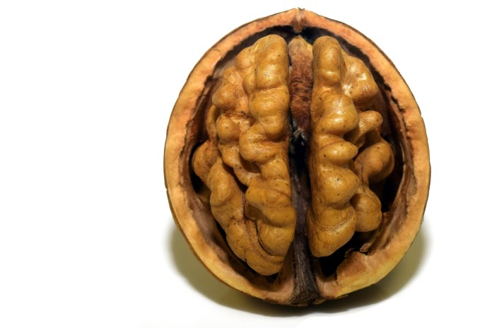 Walnuts looks like our Brain